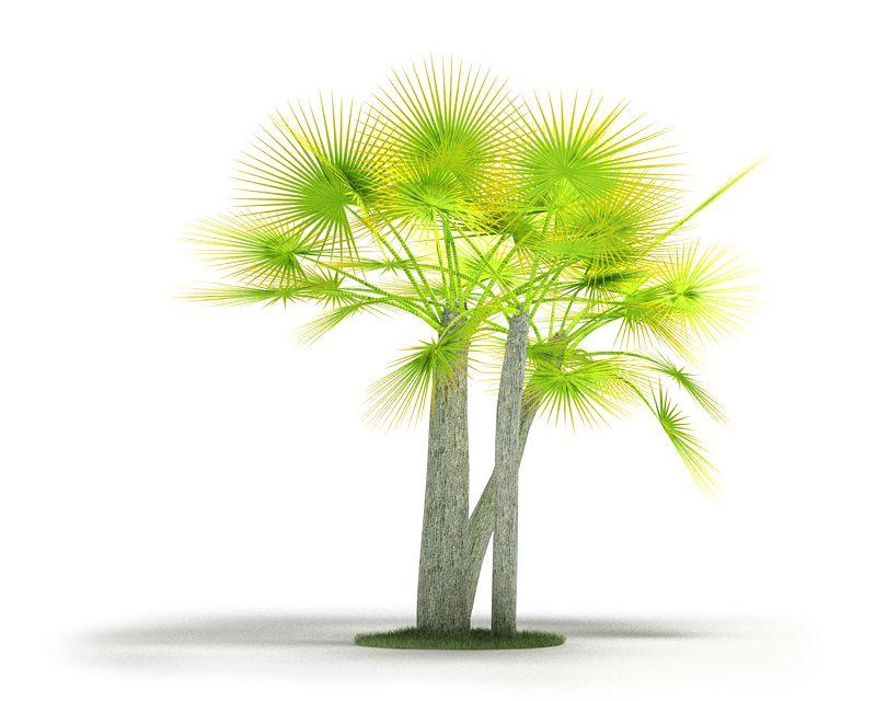 Plant 11 AM04 C4D