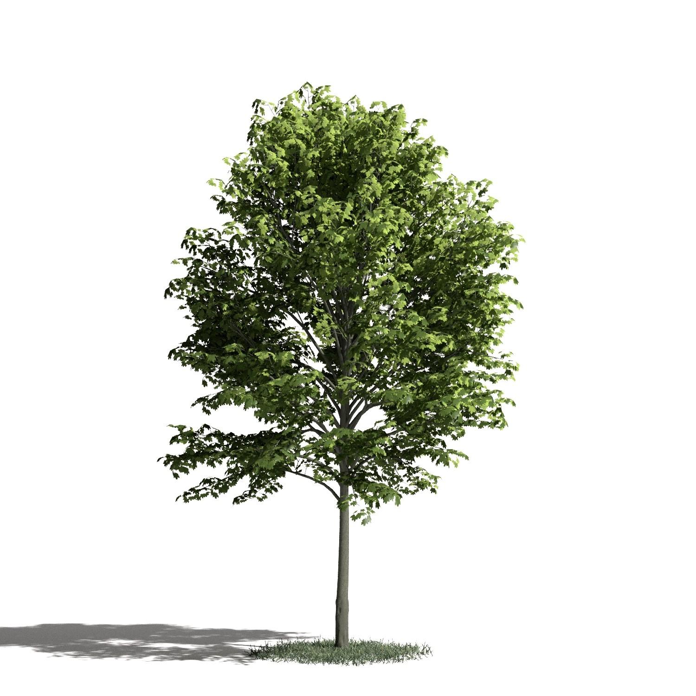 Tree 22 AM1 for Blender Archmodels