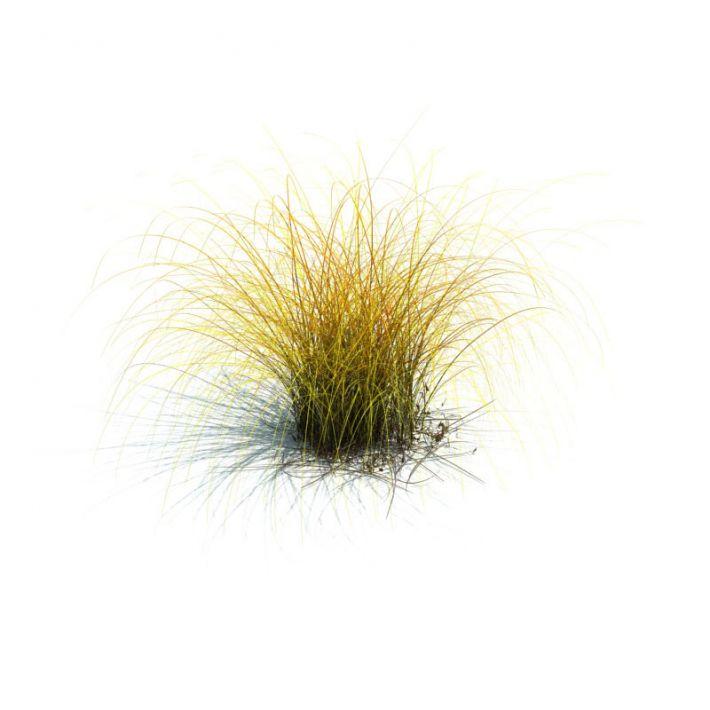 Carex aurea 77 AM126 Archmodels