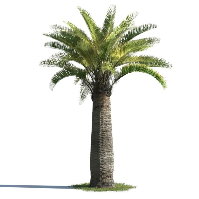 tree 68 AMC01