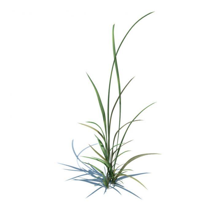 simple grass 016 am124