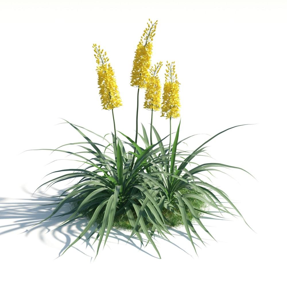 plant 16 AM183