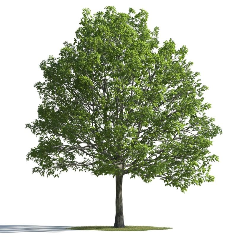 tree 34 AMC01