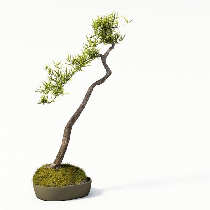Plant 42 AM24