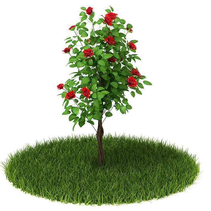 Plant 43 AM42