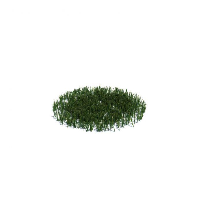 simple grass medium 014 am126