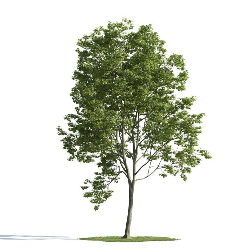 tree 13 AM163 Archmodels