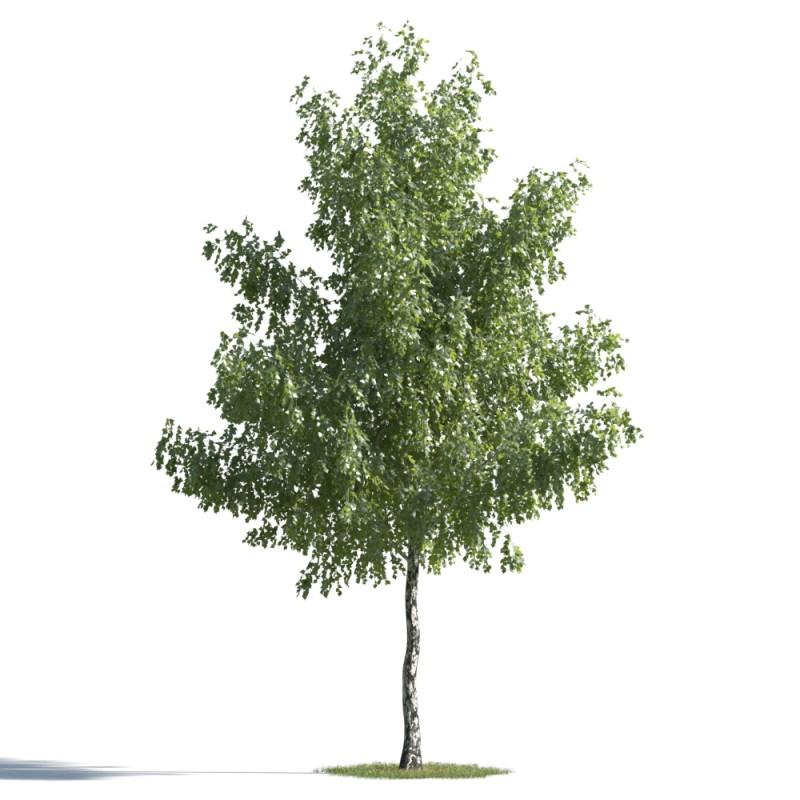 tree 76 AMC01