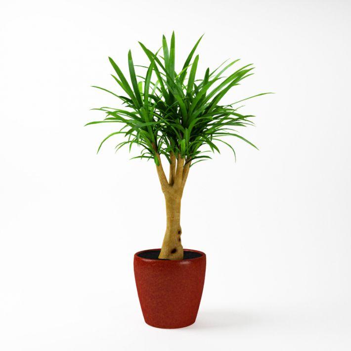 Plant 44 AM75 Archmodels