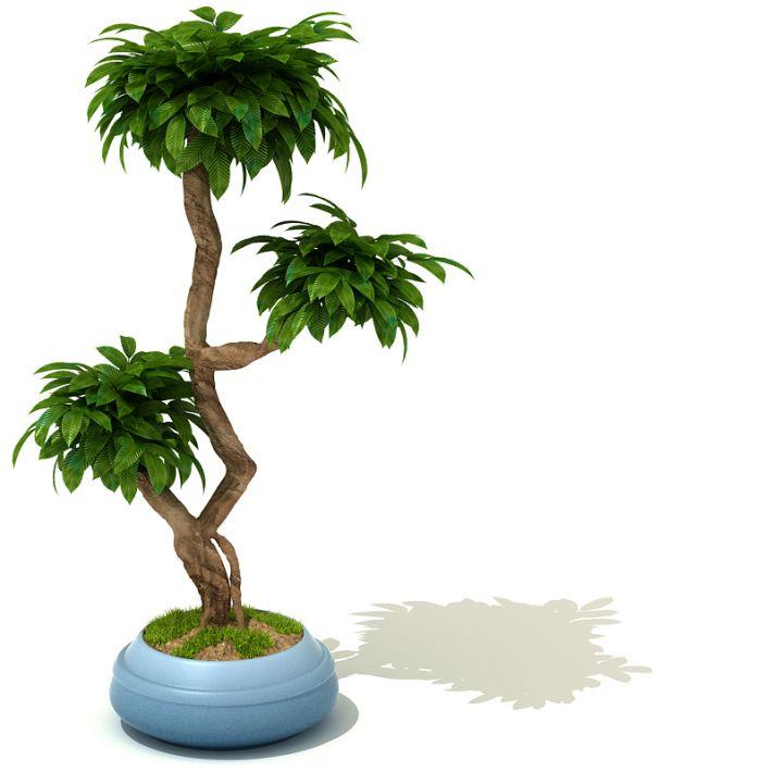 plant 30 AM41