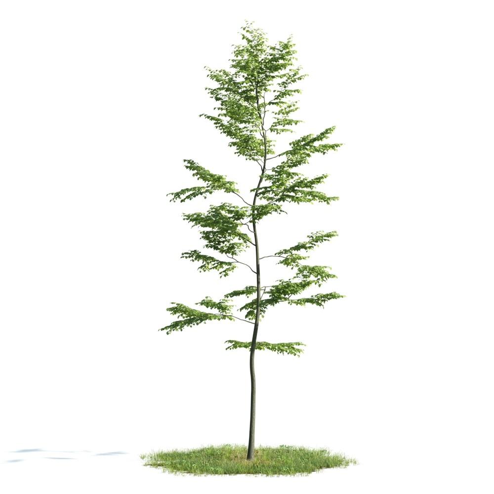 Tree 38 AM176 Archmodels