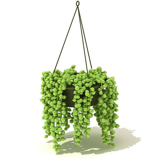 Plant 65 AM42
