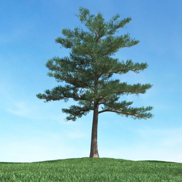tree 20 AM117 Archmodels
