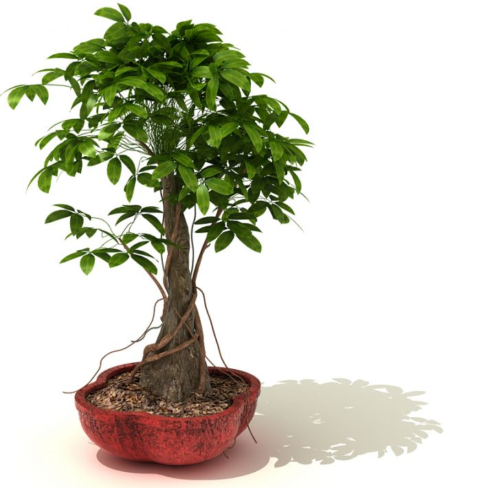plant 31 AM41 Archmodels