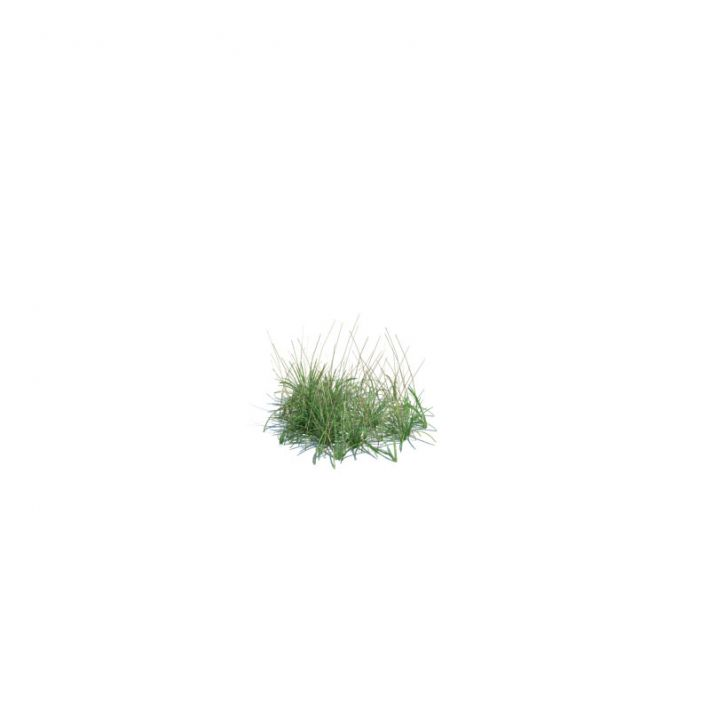 simple grass small 133 AM124 Archmodels