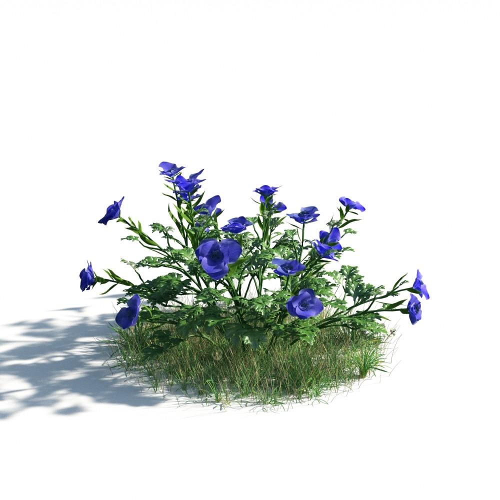 plant 06 AM183
