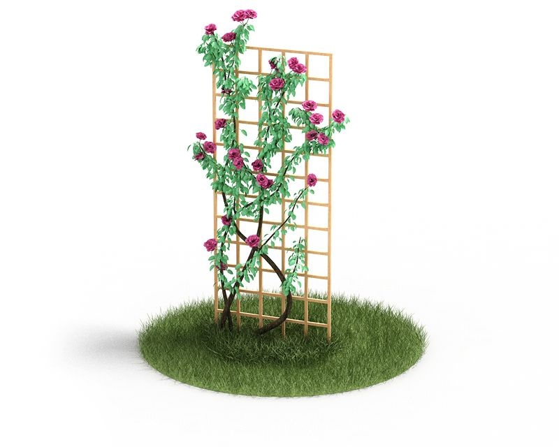 Plant 43 AM4 for Cinema4D Archmodels