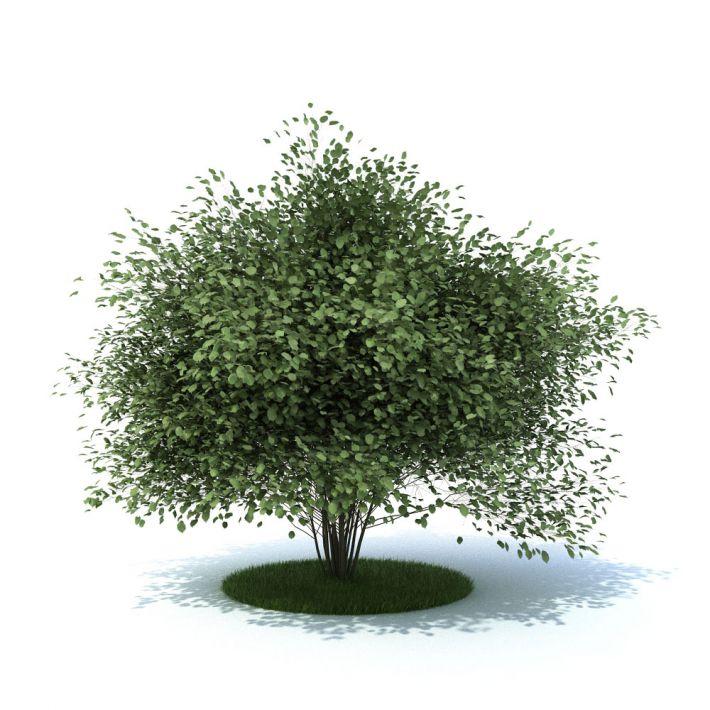 plant 19 AM105 Archmodels