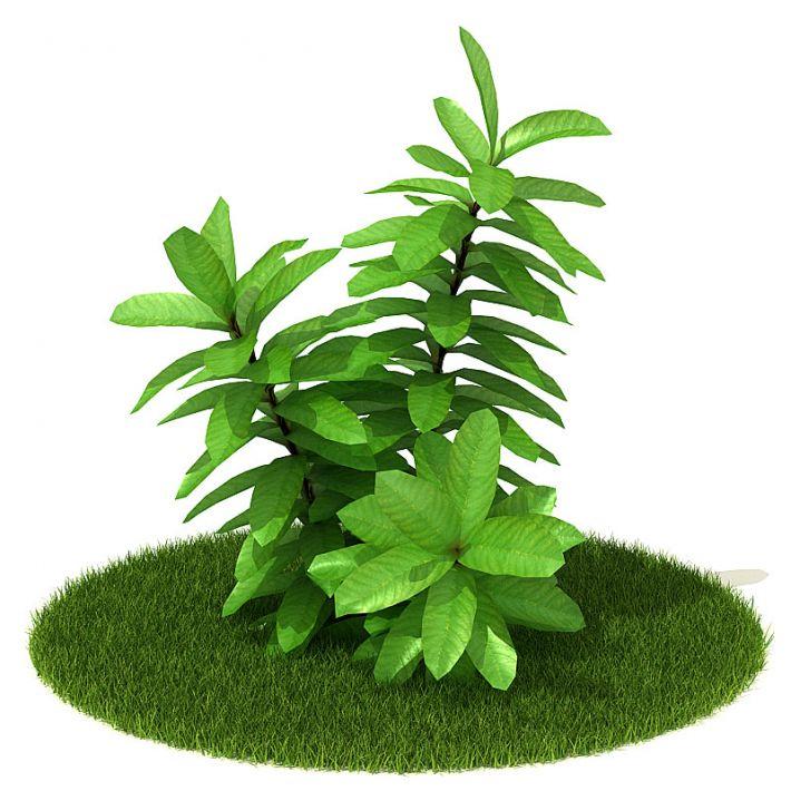 Plant 58 AM42 Archmodels