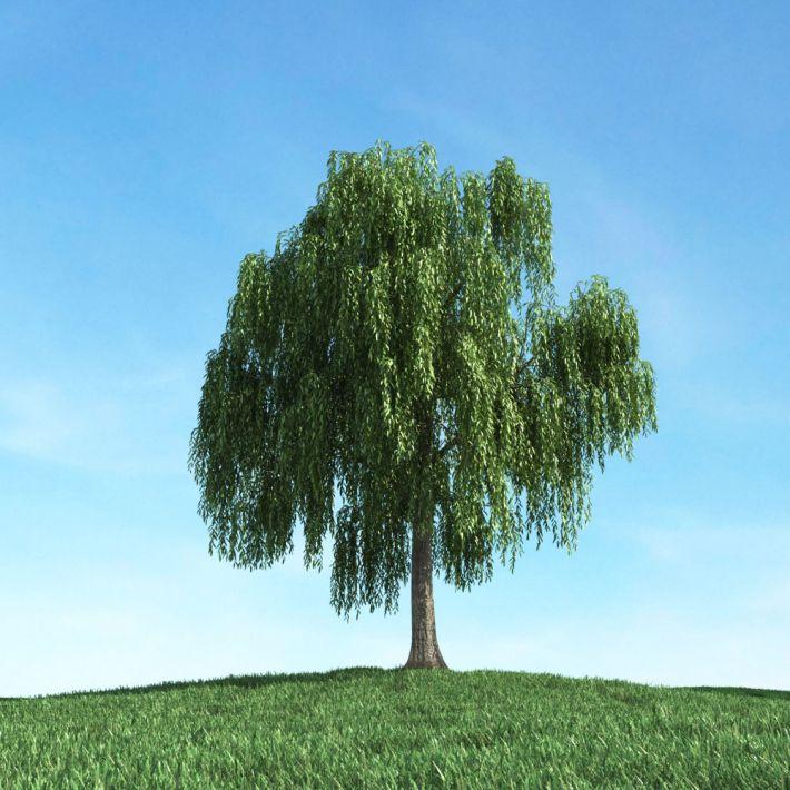 tree 17 am106