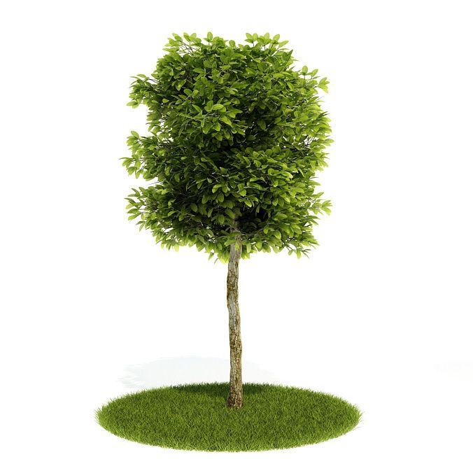 Plant 60 AM52 Archmodels