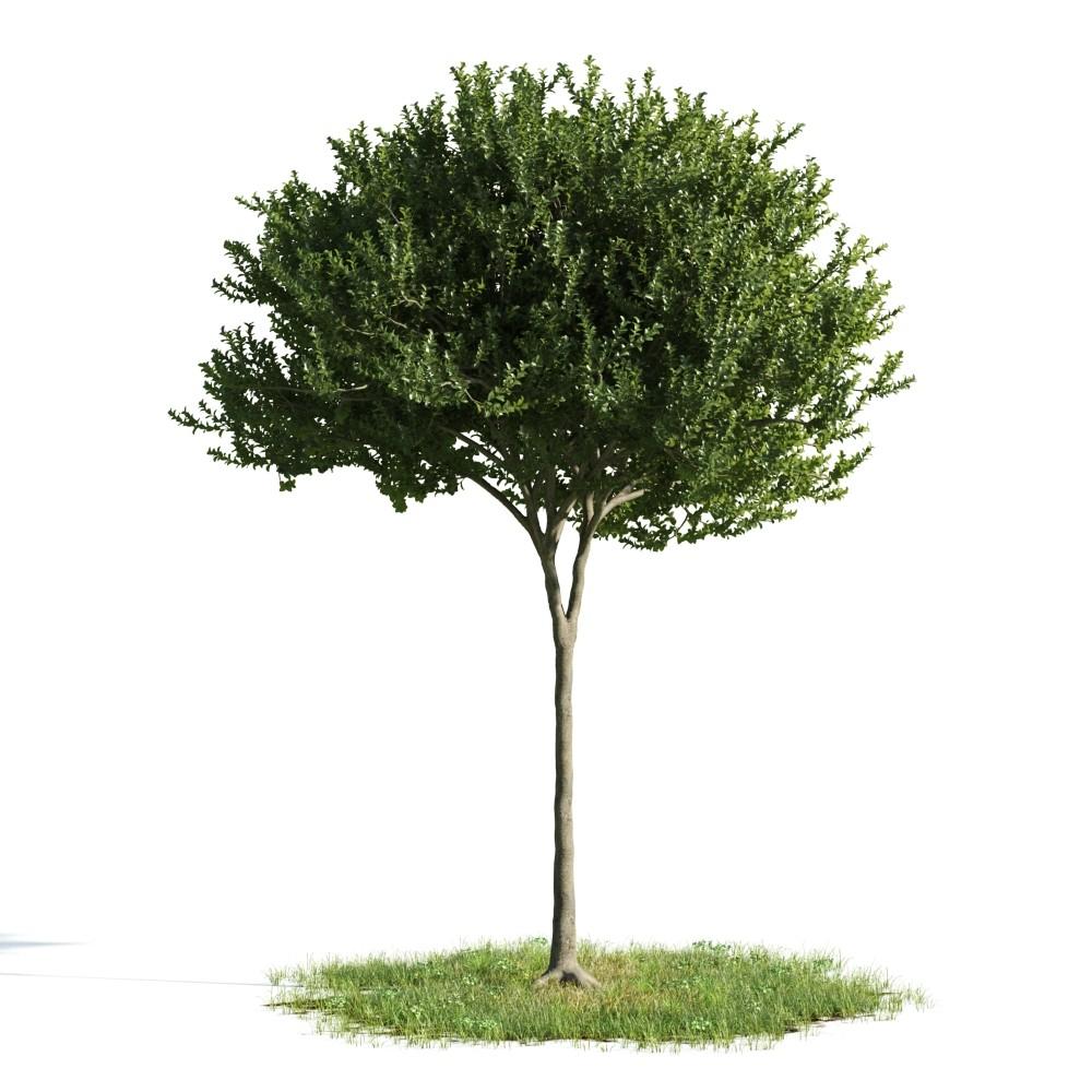 Tree 45 am176