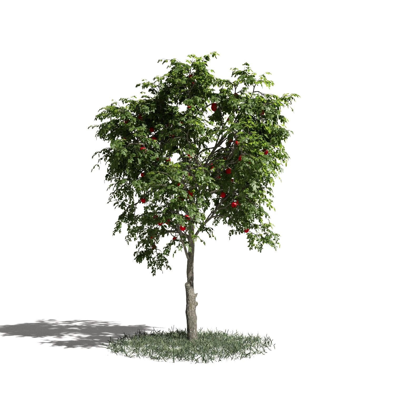 Tree 09 amb1