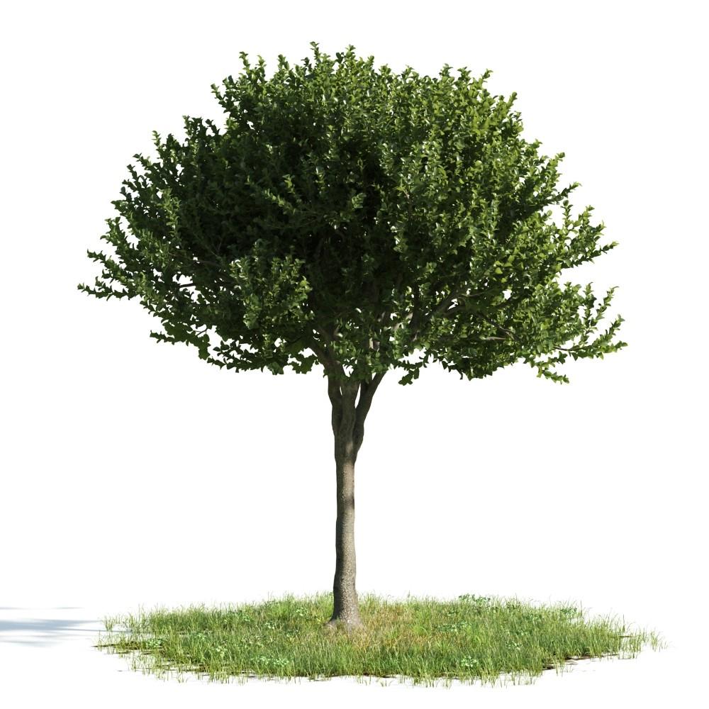Tree 44 AM176 Archmodels
