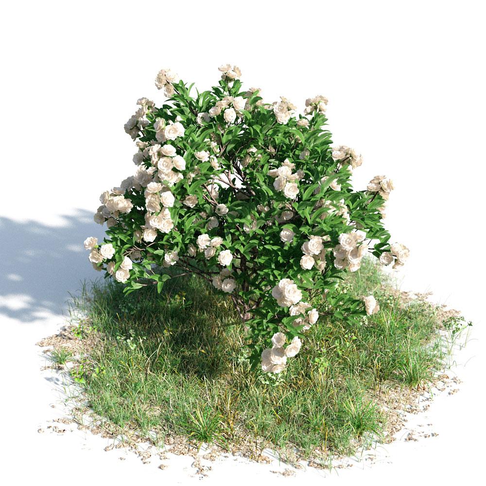Gardenia 31 AM154 Archmodels