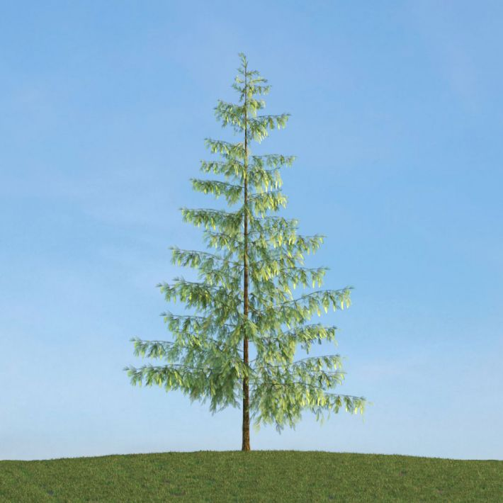 Pinus 44 AM113 Archmodels