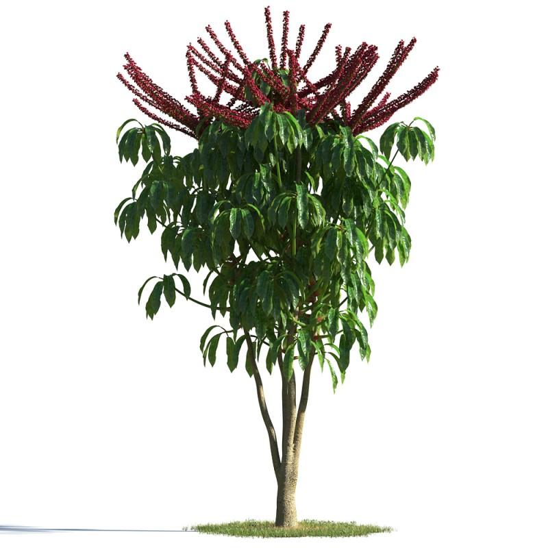 tree 17 AMC1