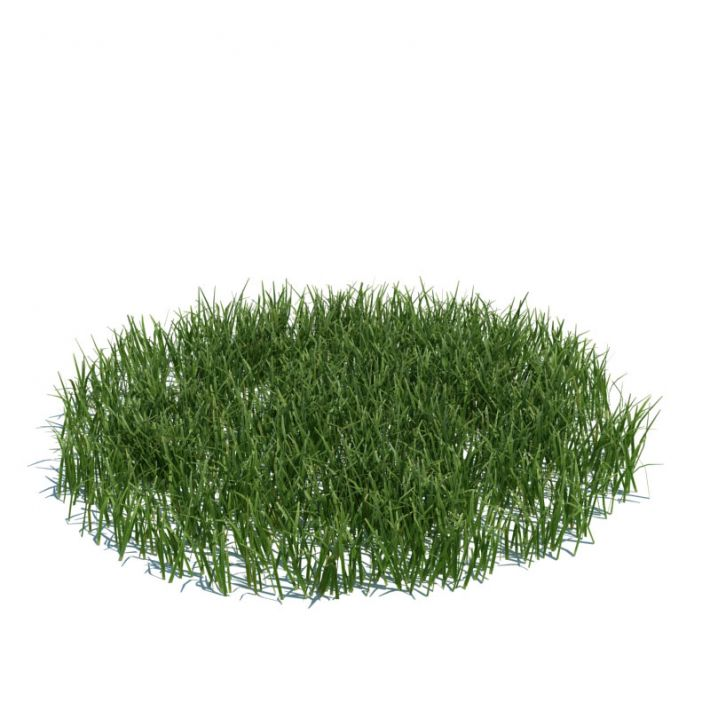 simple grass large 105 AM124 Archmodels