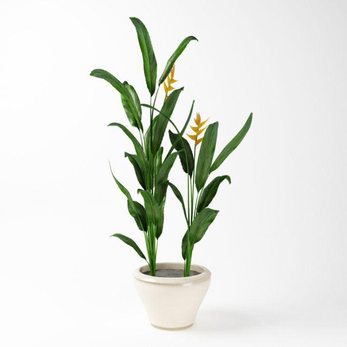 Plant 56 AM75