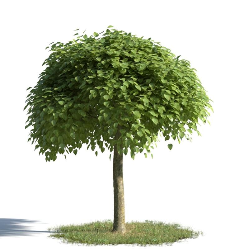 tree 95 AMC01