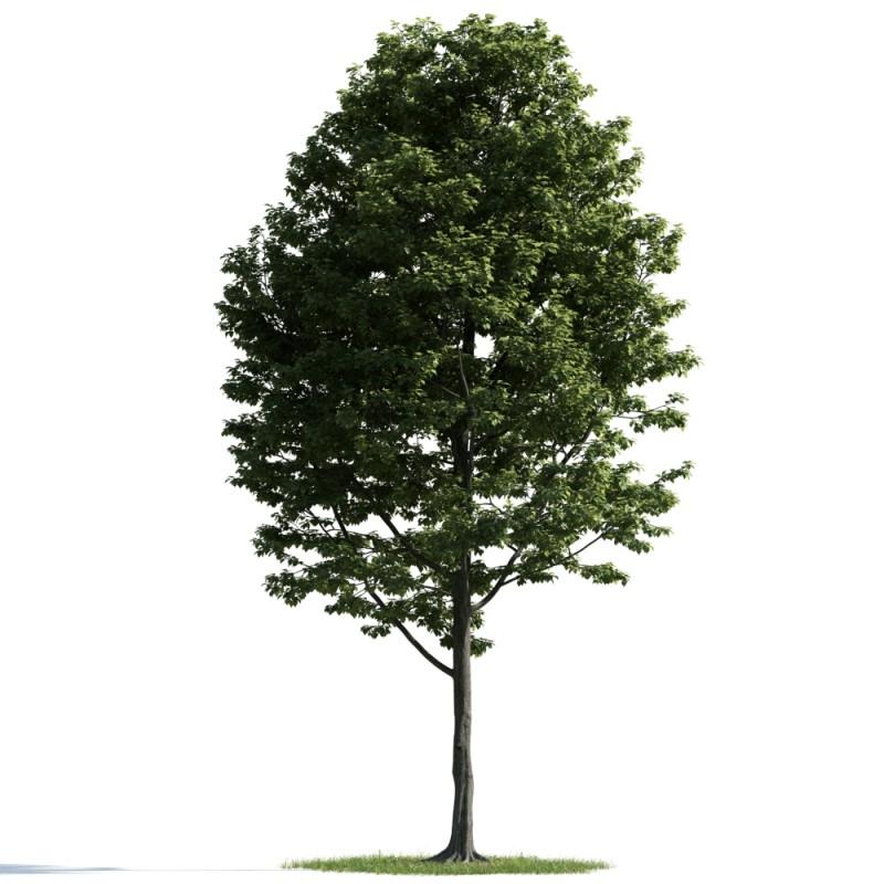 tree 42 AM163 Archmodels