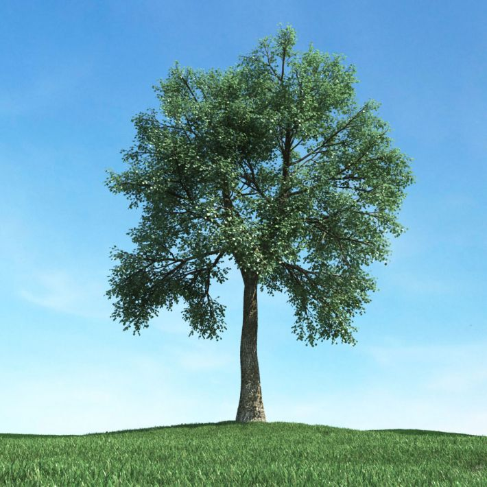 tree 48 AM117 Archmodels