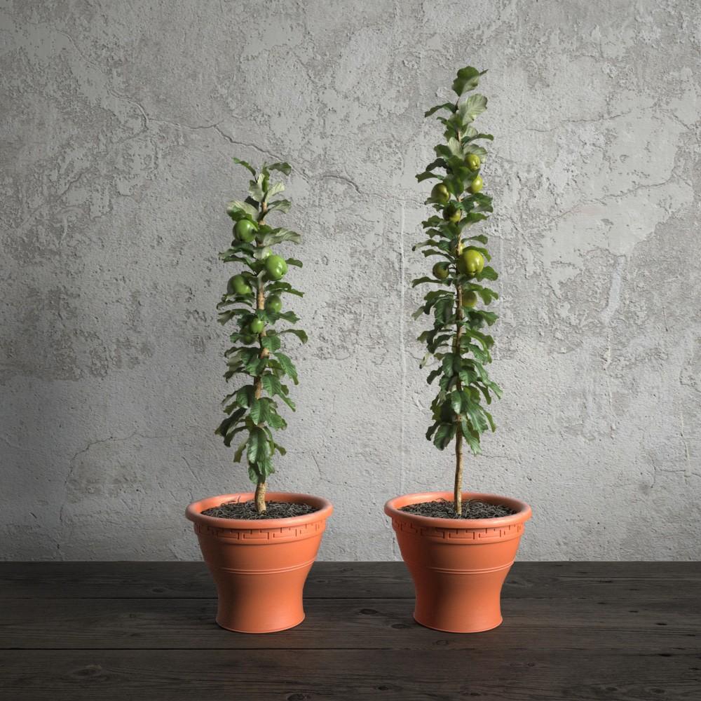 plant 49 am173