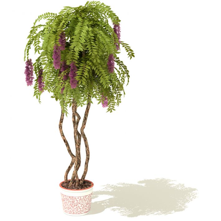 plant 27 AM41