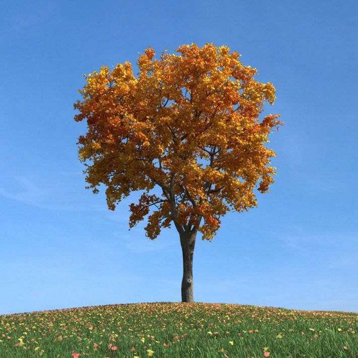 elm tree 94 AM100 Archmodels