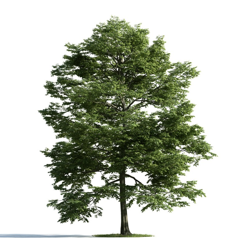tree 12 AM163 Archmodels