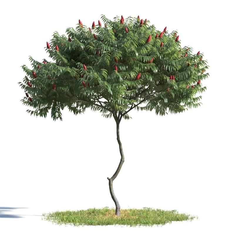 tree 01 AMC01