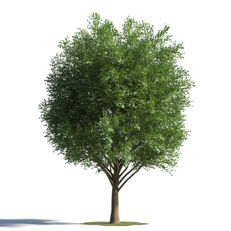 tree 49 AMC01
