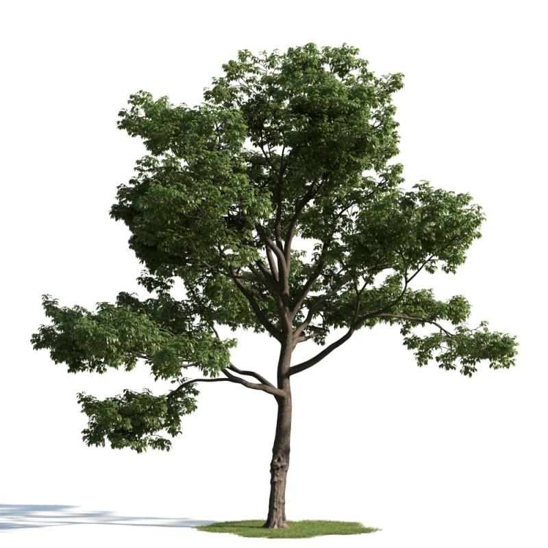 tree 50 am163