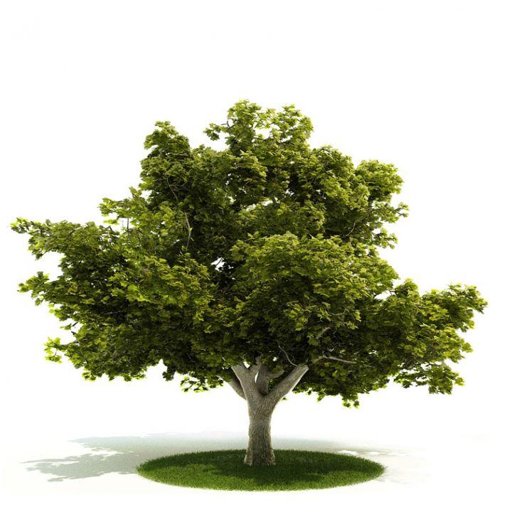 Plant 04 AM52