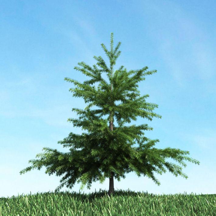 tree 56 AM117 Archmodels