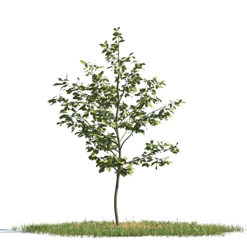 tree 82 AMC1