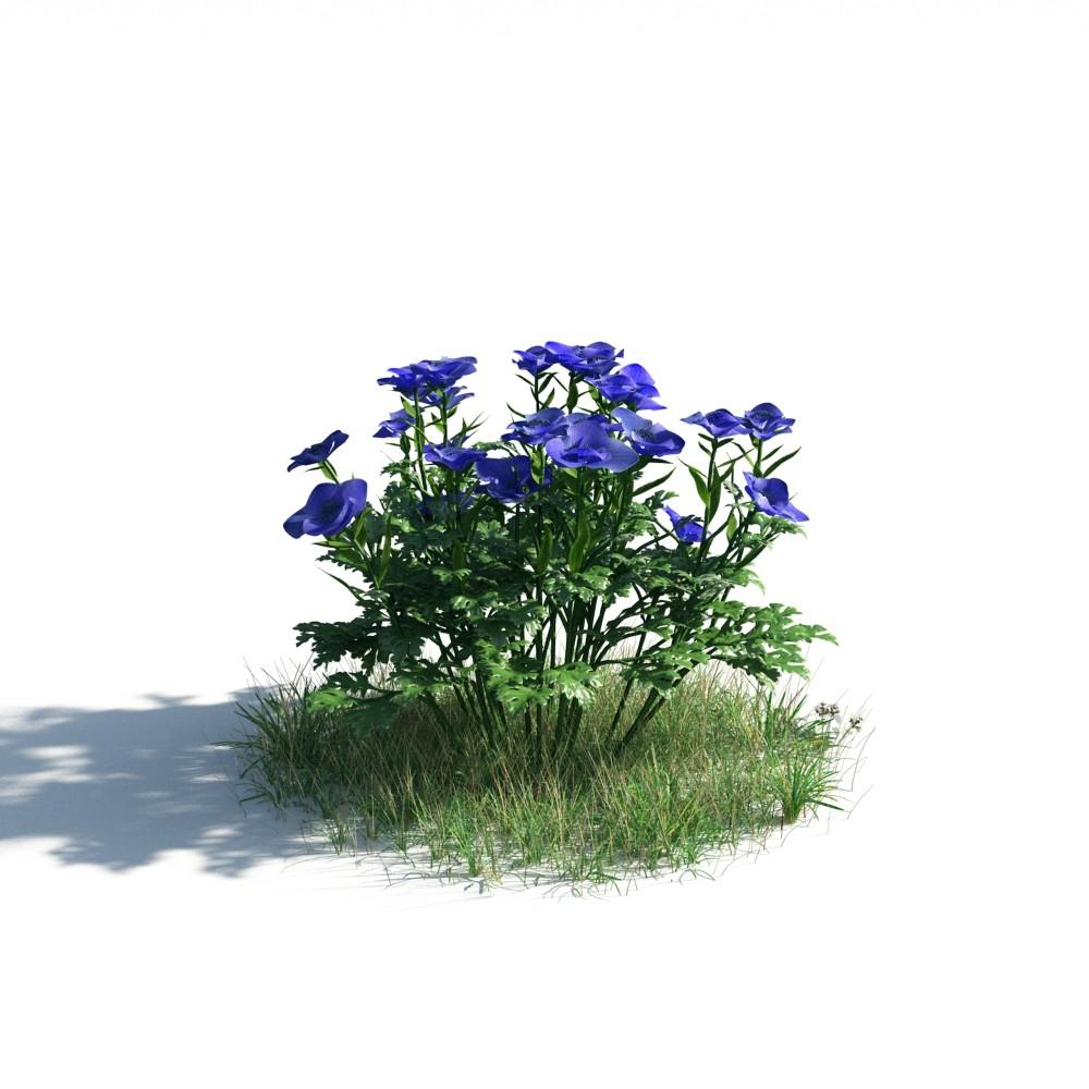 plant 05 AM183