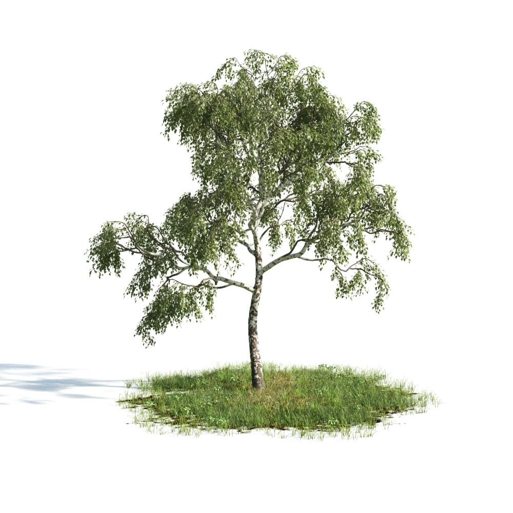 Tree 09 am176