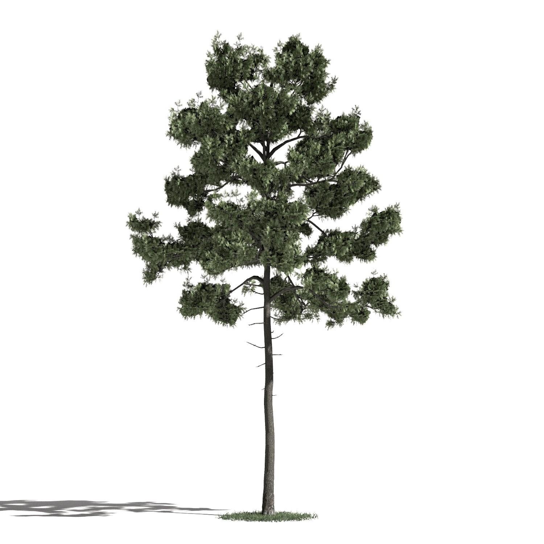 Tree 35 AM1 for Blender Archmodels