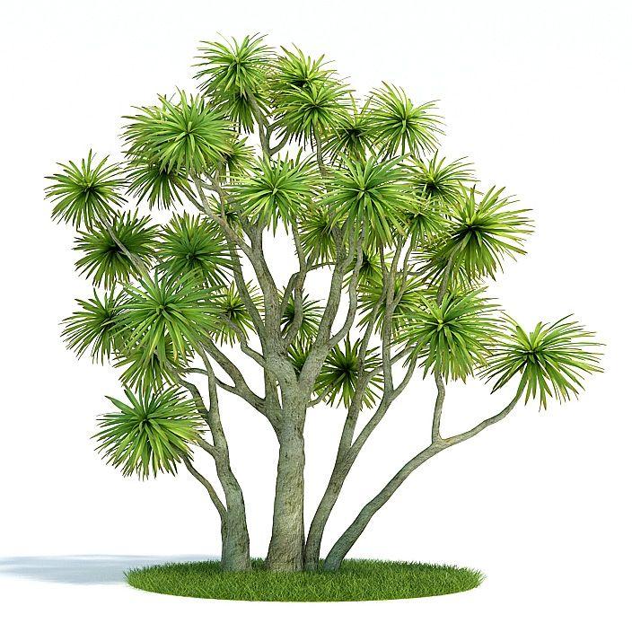 Cordyline australis Plant 6 AM61 Archmodels